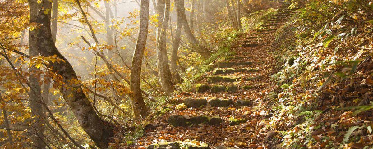 Beautiful-Natural-Staircase